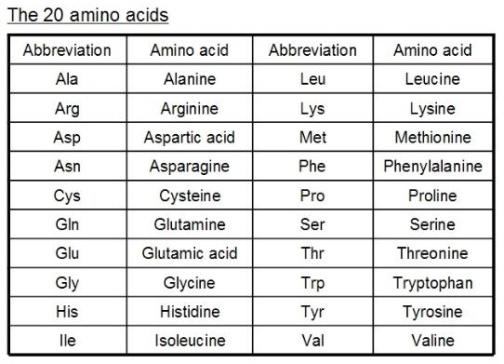 20-amino-acids