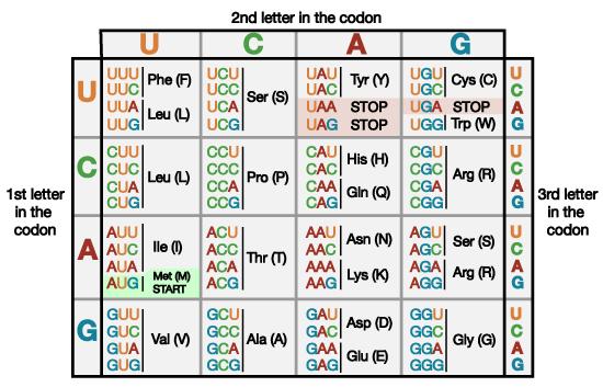 geneticcode